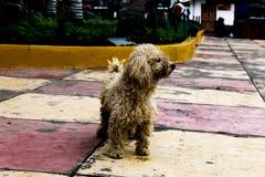 Skönheten av hundkapplöpning Royaltyfria Bilder