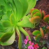Skönheten av natur 1 Royaltyfri Foto