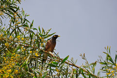 Skönheten av naturen, en härlig fågel. Royaltyfri Foto