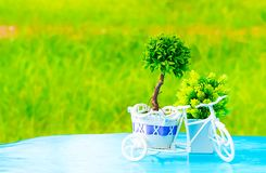 Skönheten av plast- träd Fotografering för Bildbyråer
