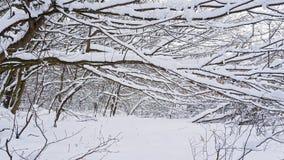 Skönheter av vinterskogen Arkivbild