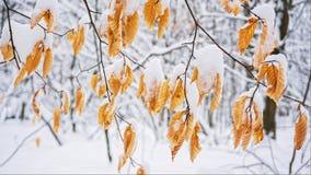 Skönheter av vinterskogen Royaltyfria Foton
