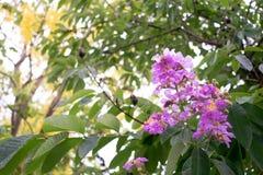 Skönhetfloribundastålar för tropiskt i sommar från Thailand royaltyfri fotografi