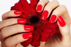 Skönhethänder med röd modemanikyr och den ljusa blomman Härligt manicured rött polermedel spikar på royaltyfri bild