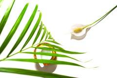 Skönhethud att att bry sig kosmetisk kräm- serum, stelnar eller maskerar som skönhetsmedelprodukt med den tropiska palmbladet och royaltyfri bild