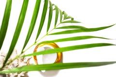 Skönhethud att att bry sig kosmetisk kräm- serum, stelnar eller maskerar som skönhetsmedelprodukt med den tropiska palmbladet och royaltyfri fotografi