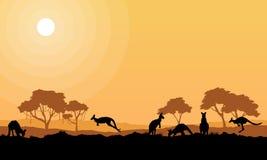 Skönhetkängurun parkerar på landskapkonturer Arkivfoto