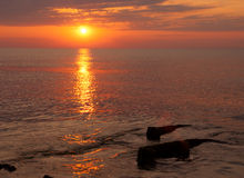 skönhetliggande över havssoluppgång Royaltyfria Foton