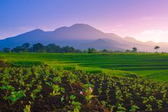 skönhetmorgon med blommor i panorama indonesia royaltyfri foto