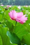 skönhetnatur Royaltyfria Bilder