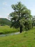 skönhetnaturegenheten rotar treen Arkivfoto