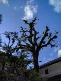 Skönhetnaturhus Royaltyfri Bild