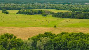 Skönhetnatursikt av mejat gräs Royaltyfri Foto