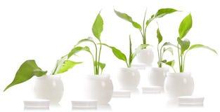 skönhetsmedel lagar mat med grädde phyto Arkivfoton