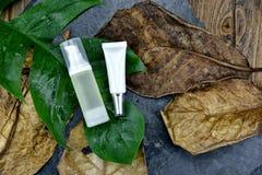 Skönhetsmedelskönhetsprodukt som förpackar för att brännmärka modellen, naturlig organisk grön ingrediens för hudomsorg royaltyfria bilder