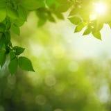 Skönhetsommardag i skogen Royaltyfria Bilder