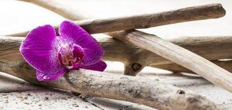 Skönhetstilleben med mjuka naturliga beståndsdelar Arkivbilder