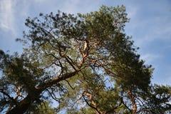 Skönhetstorhet och makt av träd Arkivfoton