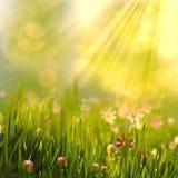 Skönhetvåren och sommarlandskapet med den nya tusenskönan blommar Royaltyfri Bild