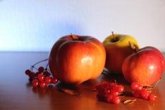 Skörd av äpplen höstlivstid fortfarande Tre nya mogna äpplen och viburnum ligger på tabellen Äpplen för bantar och sunt äta Royaltyfria Foton