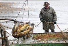 Skörd av fishponden. royaltyfri bild