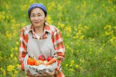 Skörd av grönsaker royaltyfri fotografi