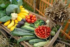 Skörd av grönsaker och kärven av öron på medlet Royaltyfri Bild