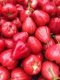 Skörd av Jambu vattenRose Apple frukt Arkivfoto