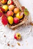 Skörd av röda äpplen i en korg och i höstsidor arkivfoton