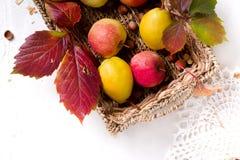 Skörd av röda äpplen i en korg och i höstsidor arkivfoto