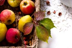 Skörd av röda äpplen i en korg och i höstsidor royaltyfria bilder