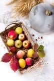 Skörd av röda äpplen i en korg och sidor för pumpawhithhöst royaltyfri fotografi
