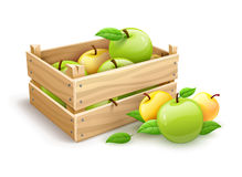Skörd för Apple fruktträdgård i träask Royaltyfri Bild
