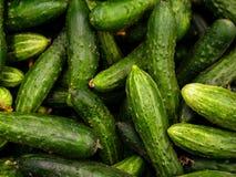 Skörd för gurkabakgrundsgurka många gurkor gurkor från fältet Landskap En bakgrund av gurkor Royaltyfria Bilder