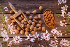 Skörd för mandelvårblomning på trä royaltyfri foto