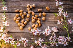Skörd för mandelvårblomning på trä royaltyfri fotografi