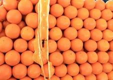 Skörd för tropiska frukter för apelsiner stor Royaltyfri Fotografi