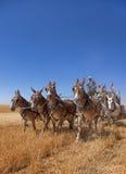 Skörd med hästar Fotografering för Bildbyråer