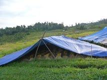 Skörd på de härliga risfälten av Jatiluwih Arkivbilder