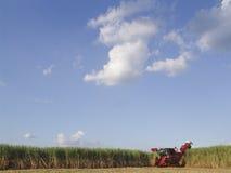 Skörd Sugar Cane Arkivfoton