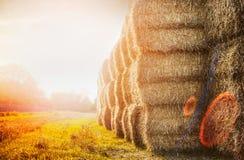Skörda baler av sugrör på solnedgångnaturbakgrund Royaltyfri Bild