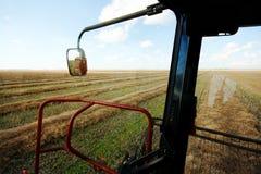 Skörda fält av korn Fotografering för Bildbyråer