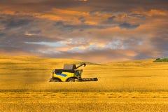 Skörda maskinen eller skördearbetaren kombinera på ett vetefält med en mycket dynamisk himmel arkivfoto