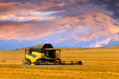 Skörda maskinen eller skördearbetaren kombinera på ett vetefält med en mycket dynamisk himmel royaltyfri fotografi