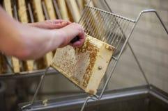 Skörda ny honung från bibikupan Arkivbilder