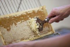 Skörda ny honung från bibikupan Arkivfoton