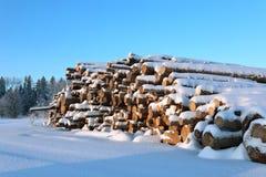 Skörda timmer loggar in en skog Arkivfoton