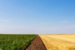 Skördade och unharvested vete- och solrosfält royaltyfria bilder