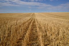 Skördade prärier för kanadensare för kornfält arkivbilder