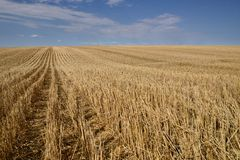 Skördade prärier för kanadensare för kornfält royaltyfri foto